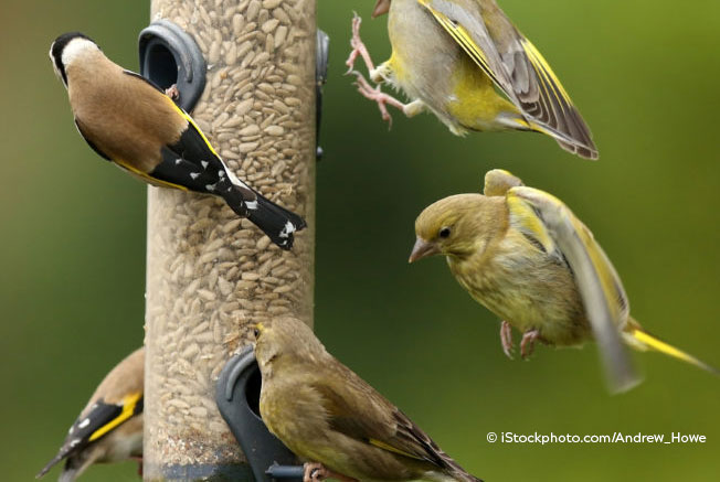 Pictures of birds eating from a bird feeder